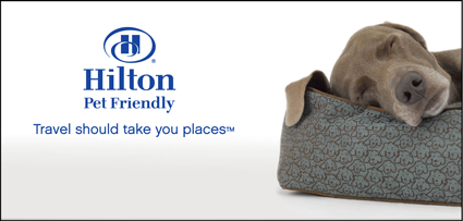 Hilton Hotels Recently Launched Pet Friendly A Program Designed To Make Traveling With Pets Easier Beginning This Summer Cats And Dogs Will Be